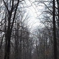 Весенний лес :: Роман Снегов