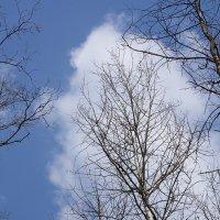 Весеннее небо :: Роман Снегов