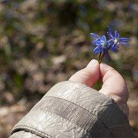 Первые цветы :: Роман Снегов