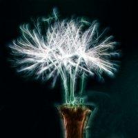 Dandelion in vase :: Антон Богданов