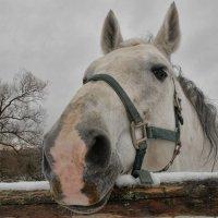 лошадь (или, все-таки, конь) :: Алексей Фокин