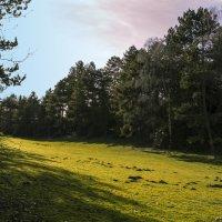 Солнечная поляна :: Андрей Бойко
