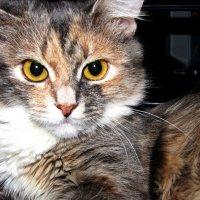 Кошка Нюша :) :: Татьяна Лобачева