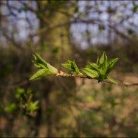 Весна! :: Андрей Бойко