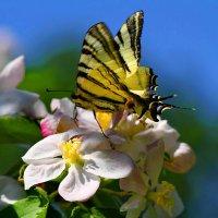 весна :: valeriy g_g