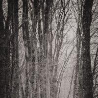 в готическом лесу :: Алексей Жариков