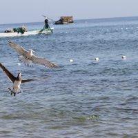 Индийский океан :: Светлана Телегина