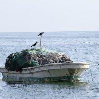 На рыбалке :: Светлана Телегина