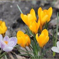 Наконец пришла весна :: Виктор Марченко