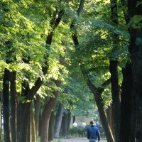 Александровский сад :: Мария Какоткина