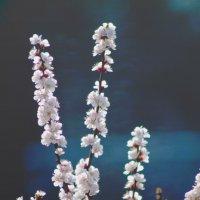 весна :: Лариса Панченко