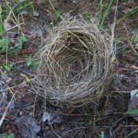 Гнездо :: Света Слаутина