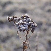 повеяло холодом :: Kosta Krapiva