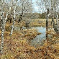 Весна в лесу :: Владимир Зыбин