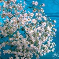 Весенний мотив :: Анастасия Белякова