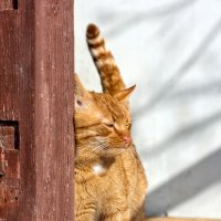 Весенний кот :: Екатерина Бакулина