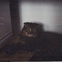Боня (кот) :: Александр Идикеев