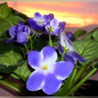 В свете закатного солнца :: galina tihonova