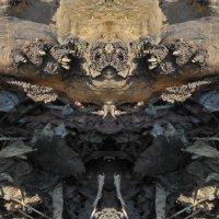 каГтыстый черепах(от Дмитрия Цымбалист с благодарностью) :: Юрий Вовк