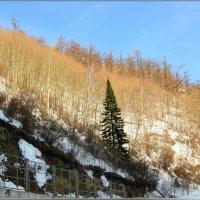 Конец марта в горах :: galina tihonova
