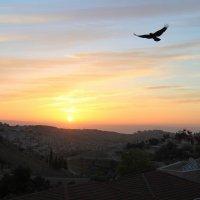 Полёт над Иерусалимом :: Владимир Сарычев