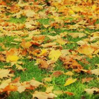 Осень :: Сергей Дячкин