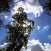 Какое небо голубое!!!! :: Oleg Gendelman