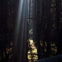 лес :: Вадим Некрасов