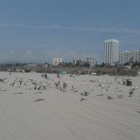 птицы на пляже :: нина полянская