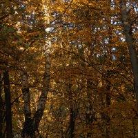 Осенние листья :: Міша Габер