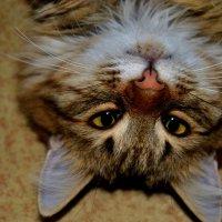 favorite cat :: Ксения Никитина