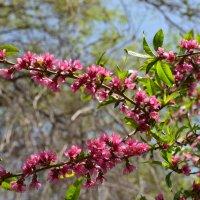 Spring :: Vana Harutyunyan