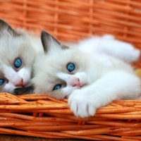 Два голубоглазых братика :: Владимир Сарычев