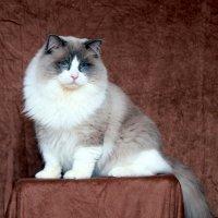 Наш кот по имени Heppy :: Владимир Сарычев