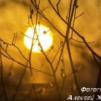 закат :: Алексей Жариков