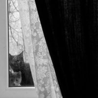 Пустите погреться! :: Александра Губина