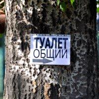 ужасы нашего городка :: человечик prikolist