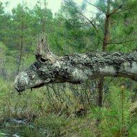 Он из лесу вышел... :: Игорь Суханов
