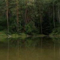 озеро в лесу :: Михаил Фролов