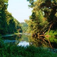 У лукоморья дуб зелёный… :: kolin marsh