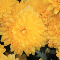Цветочный хоровод-300. :: Руслан Грицунь
