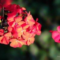 Цветок с клумбы. :: Ирина Токарева
