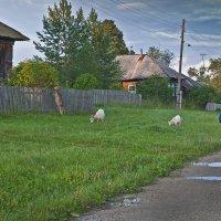 Вечерняя прогулка, - заметьте любимцы без поводков и намордников...)) :: Владимир Хиль