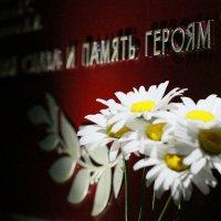 "Цветы жизни :: Даша ""Шуня"" Берейчук"