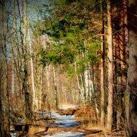 лесной коридор :: Ольга (Кошкотень) Медведева