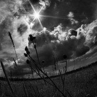 В лучах звезды по имени Солнце... :: Дмитрий Воронин