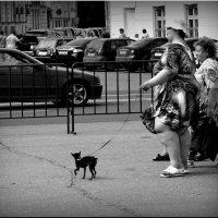 Дамы с собачкой! :: Владимир Шошин