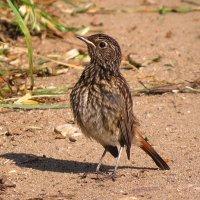 ...одна маленькая, но гордая птичка... :: Вячеслав Минаев