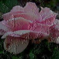 Увековеченная роза :: Нина Корешкова