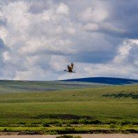 Журавль по небу летел.... .Чукотский пейзаж. :: Юрий Харченко
